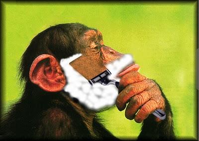 Monkey Shaving